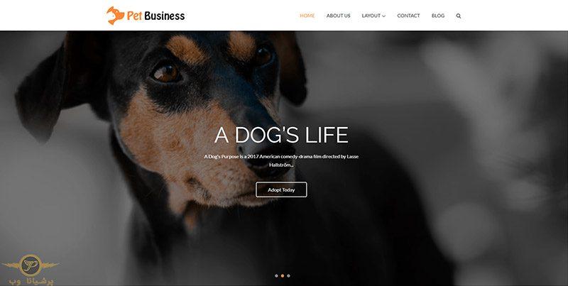 طراحی وب سایت حیوانات خانگی